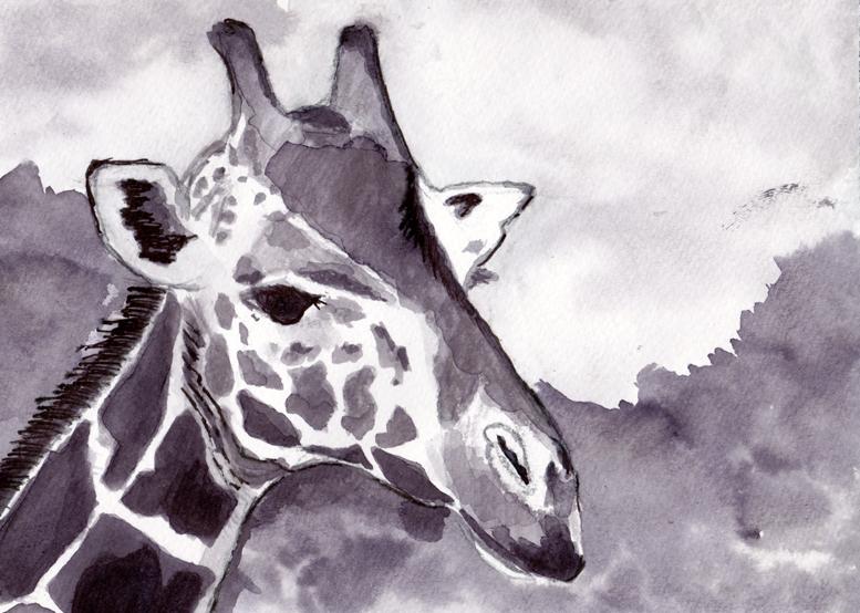 giraffe-am